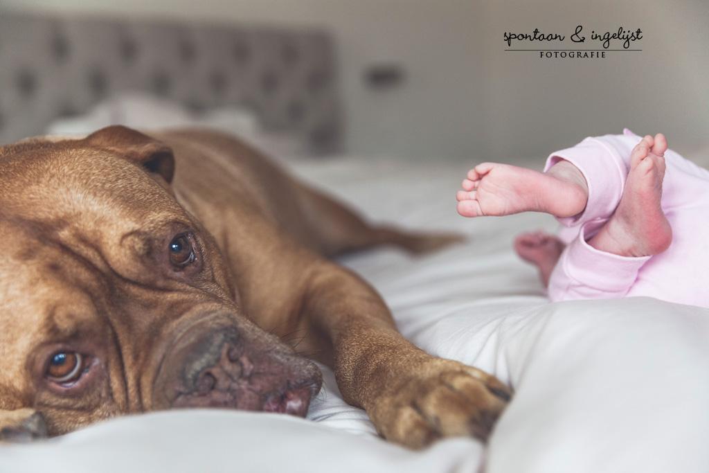 Die kleine voetjes en die grote hond! Dit soort momenten vastgelegd voor altijd in een prachtige lifestyleshoot